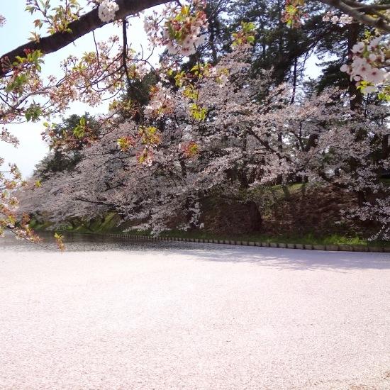 東北桜旅 〜青森篇〜_f0197215_21422424.jpg