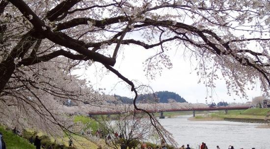 東北桜旅 〜秋田篇〜_f0197215_21462172.jpg