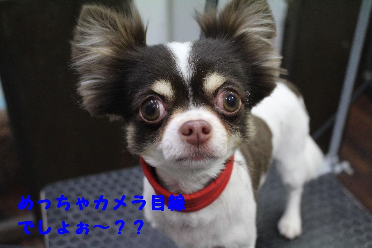 今日の朝定~!_b0130018_07273538.jpg