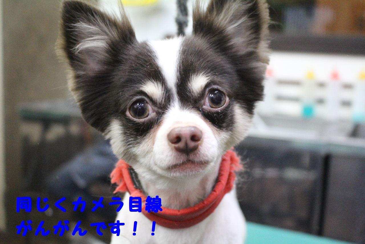 今日の朝定~!_b0130018_07275758.jpg