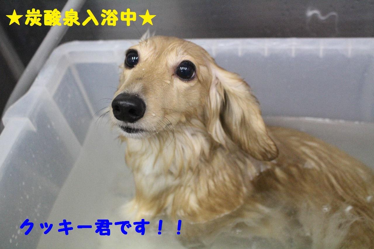 今日の朝定~!_b0130018_07331314.jpg