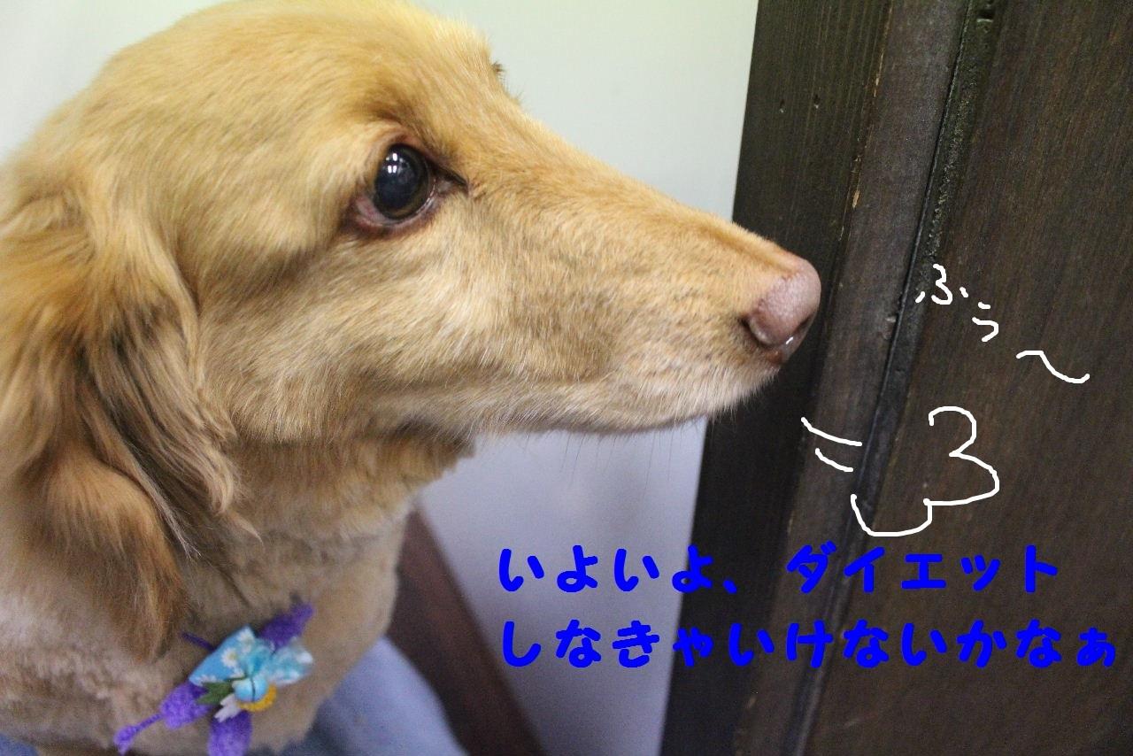 b0130018_13361172.jpg