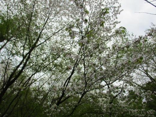 色々な季節を同時に       5月1日_d0127634_10254609.jpg