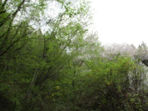 色々な季節を同時に       5月1日_d0127634_10294005.jpg
