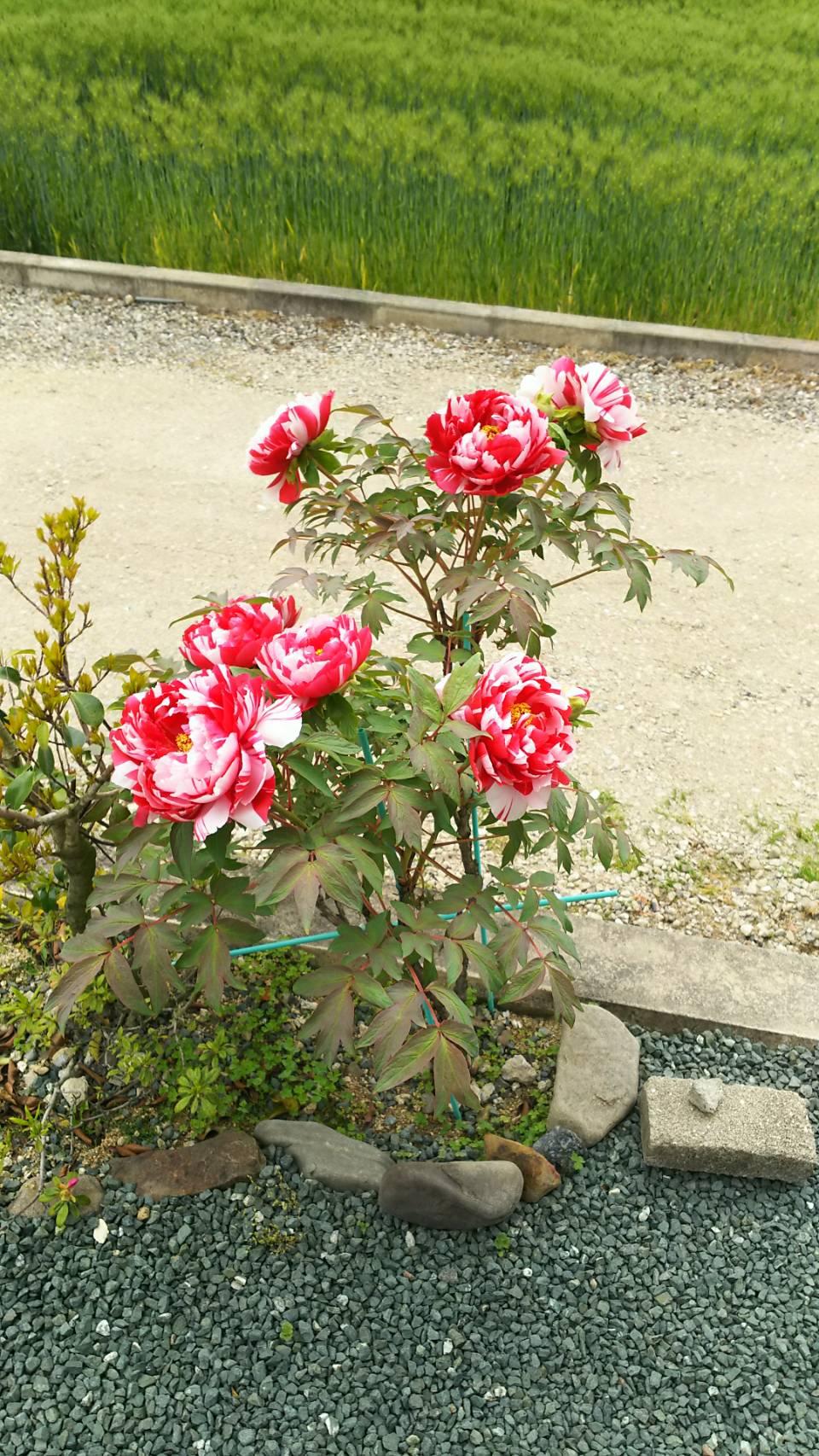 家の庭に…_a0167735_15351134.jpg