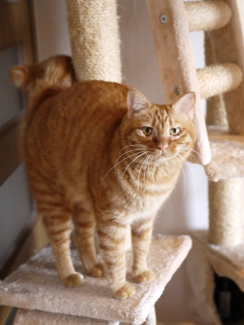 猫のお留守番 タマラちゃん編。_a0143140_22522662.jpg