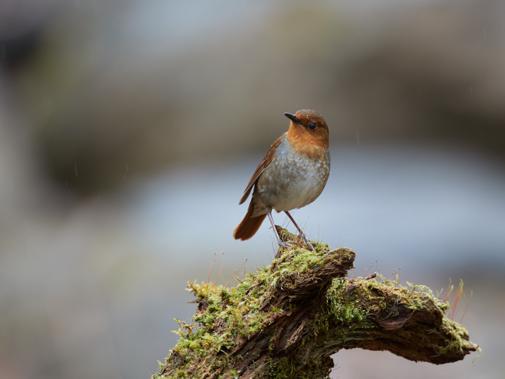GW 鳥撮り遠征その1_f0113349_1804697.jpg