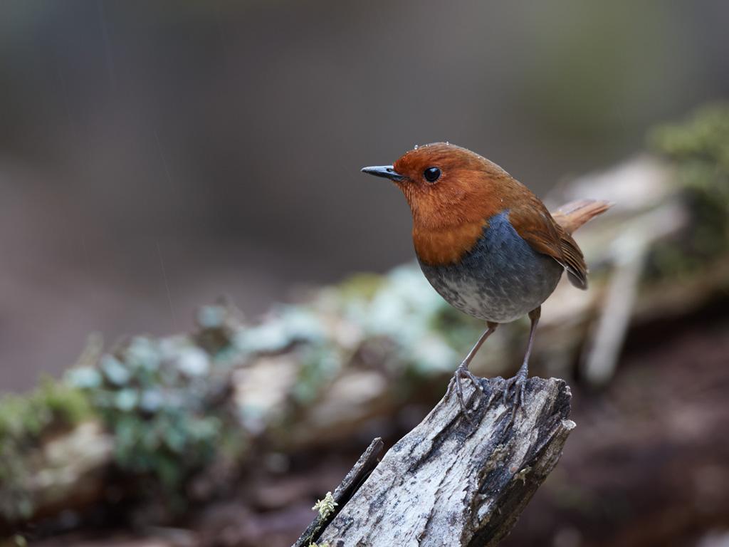 GW 鳥撮り遠征その1_f0113349_181994.jpg
