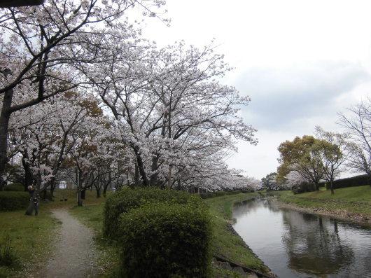 早い季節の移ろいに驚かされる日々 _a0201257_13582082.jpg