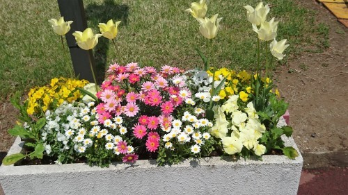 それぞれの春_f0228967_21522803.jpg