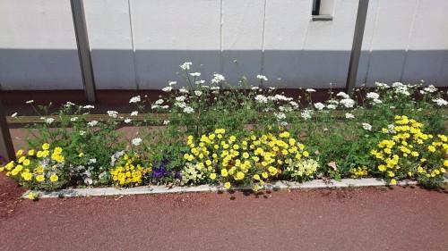 それぞれの春_f0228967_21534978.jpg