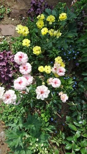 それぞそれぞれの春_f0228967_22262512.jpg