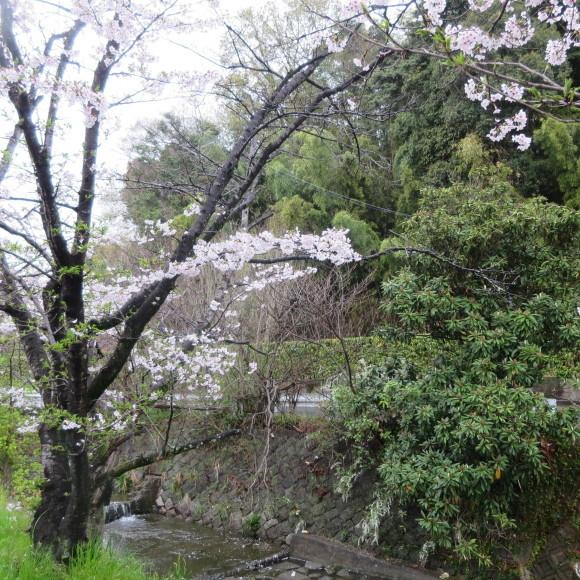 秋篠川を上るおっさん。_c0001670_19260696.jpg