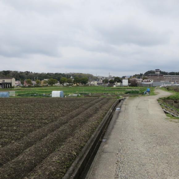 秋篠川を上るおっさん。_c0001670_19264892.jpg