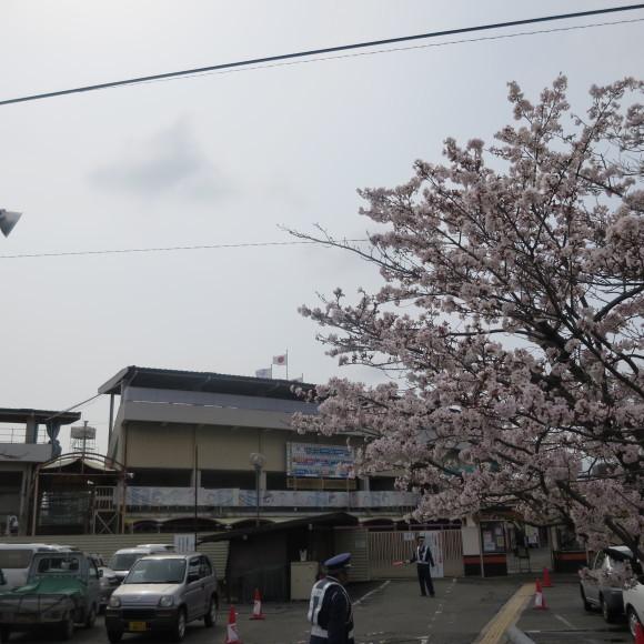 秋篠川を上るおっさん。_c0001670_19265960.jpg