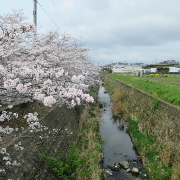 秋篠川を上るおっさん。_c0001670_19270498.jpg