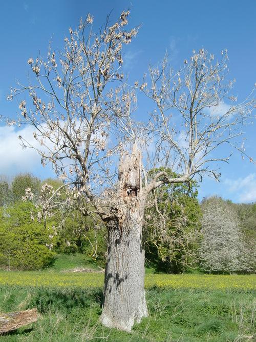春爛漫、スコットランドの桜自慢_c0027188_455435.jpg