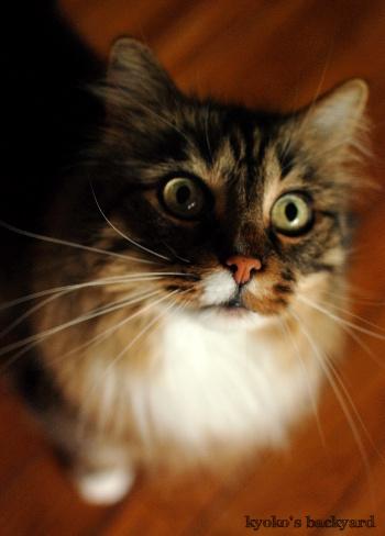 猫にメロン。喜ぶ姉とがっかりする弟。_b0253205_06175747.jpg