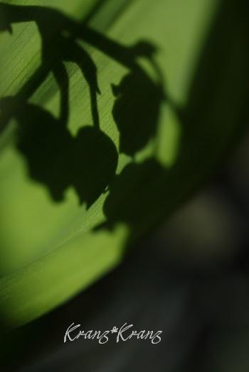 b0119421_10394447.jpg