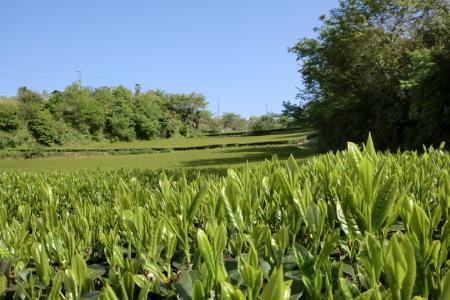 新緑に囲まれて、夏野菜の植え付け.._b0137932_16375532.jpg