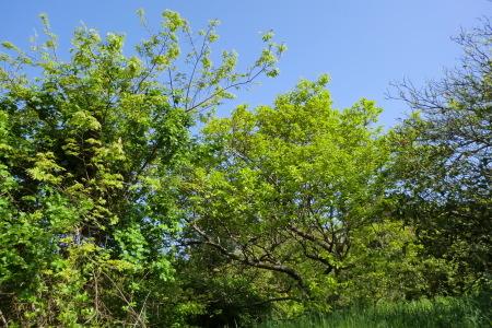 新緑に囲まれて、夏野菜の植え付け.._b0137932_16391995.jpg