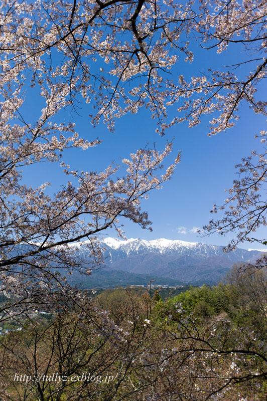 伊那谷の桜(2)_d0108132_16242193.jpg