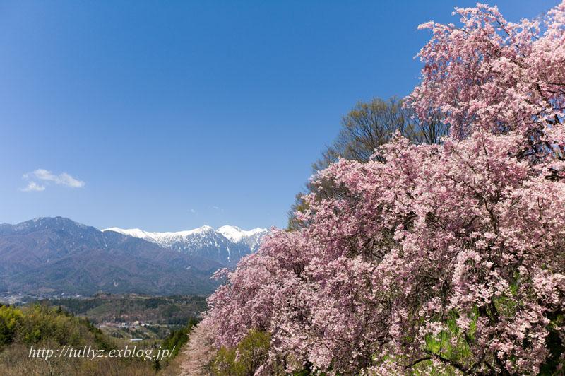 伊那谷の桜(2)_d0108132_1624743.jpg