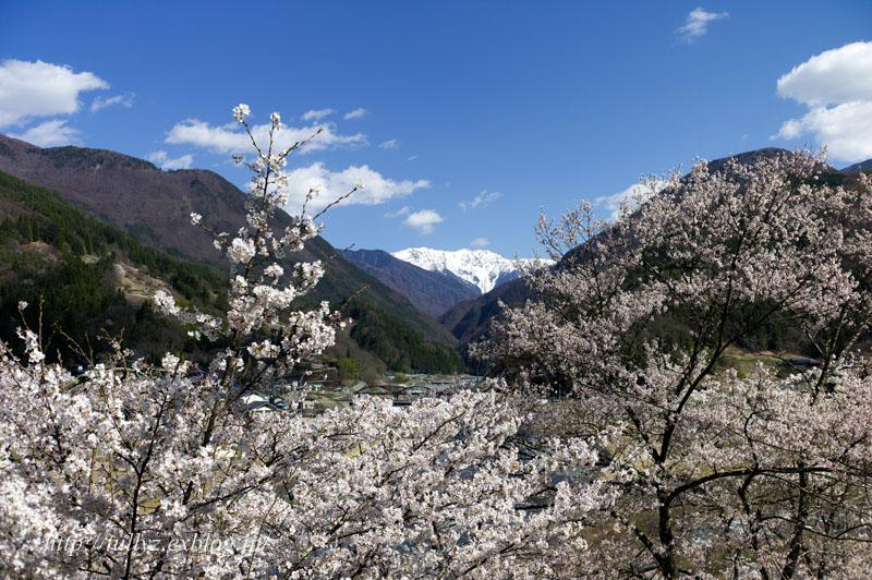 伊那谷の桜(3)_d0108132_1629512.jpg
