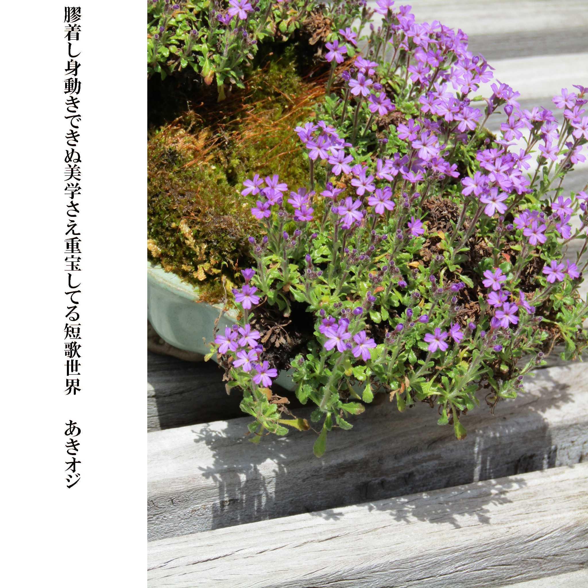 f0117041_18272891.jpg