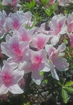 我が家の庭_b0328361_20484885.jpg