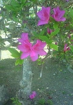 我が家の庭_b0328361_20485040.jpg