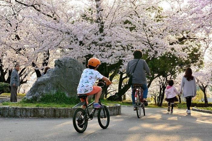 落合公園の桜_c0330563_23141233.jpg
