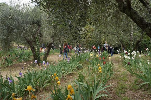 開催中!フィレンツェのアイリス庭園はこれからが見頃です_f0106597_06231871.jpg