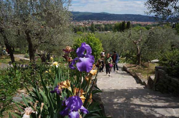 開催中!フィレンツェのアイリス庭園はこれからが見頃です_f0106597_06265030.jpg