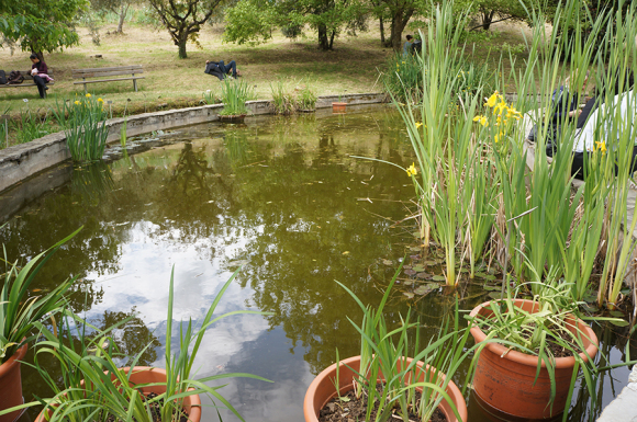 開催中!フィレンツェのアイリス庭園はこれからが見頃です_f0106597_06342548.jpg