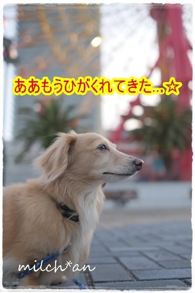 b0115642_17335576.jpg