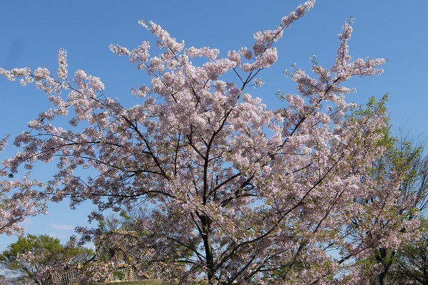 白鳥公園 散策_a0098746_9471072.jpg
