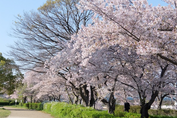 白鳥公園 散策_a0098746_948188.jpg
