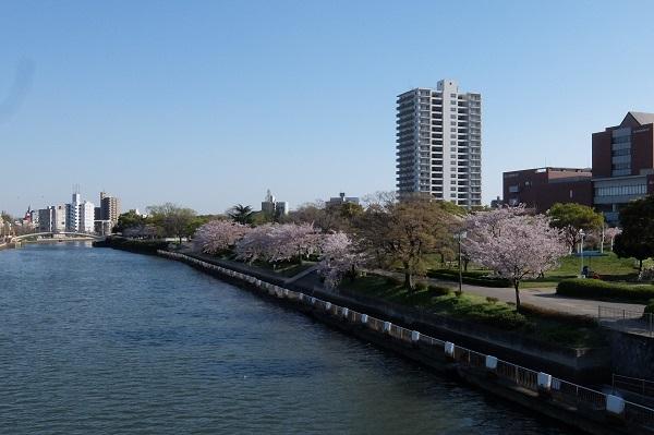 白鳥公園 散策_a0098746_9515520.jpg