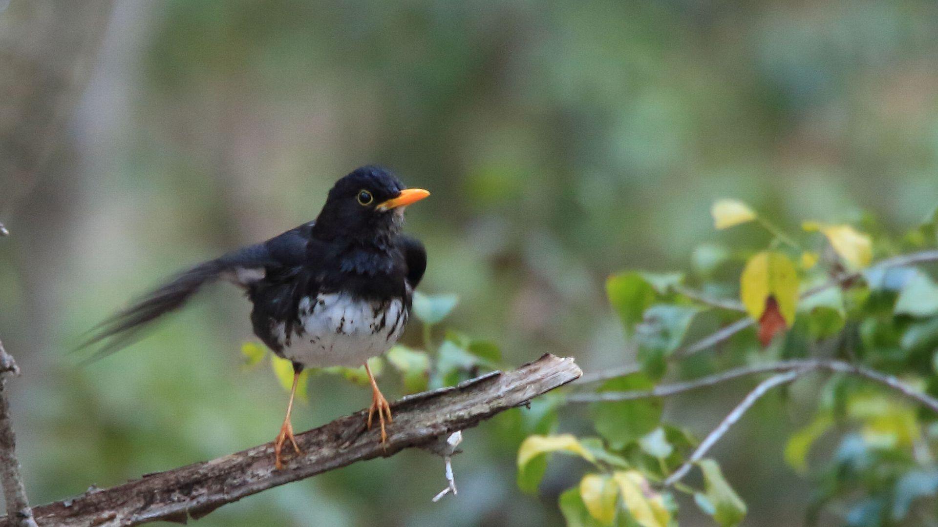 山中湖の夏鳥達その4_f0105570_21235427.jpg