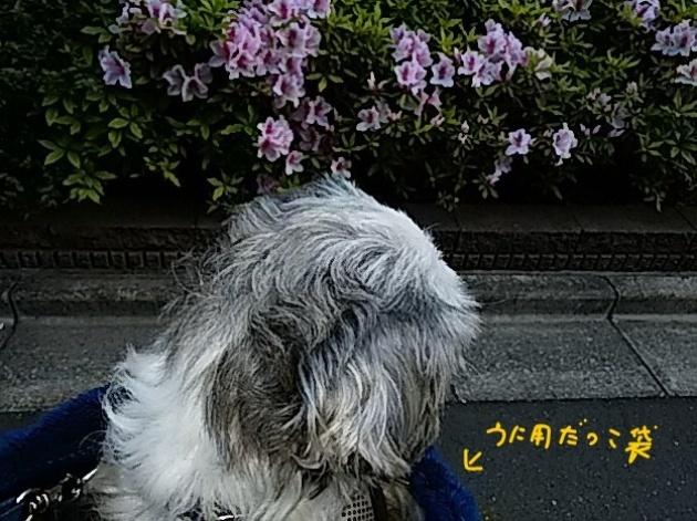 f0280186_18493879.jpg