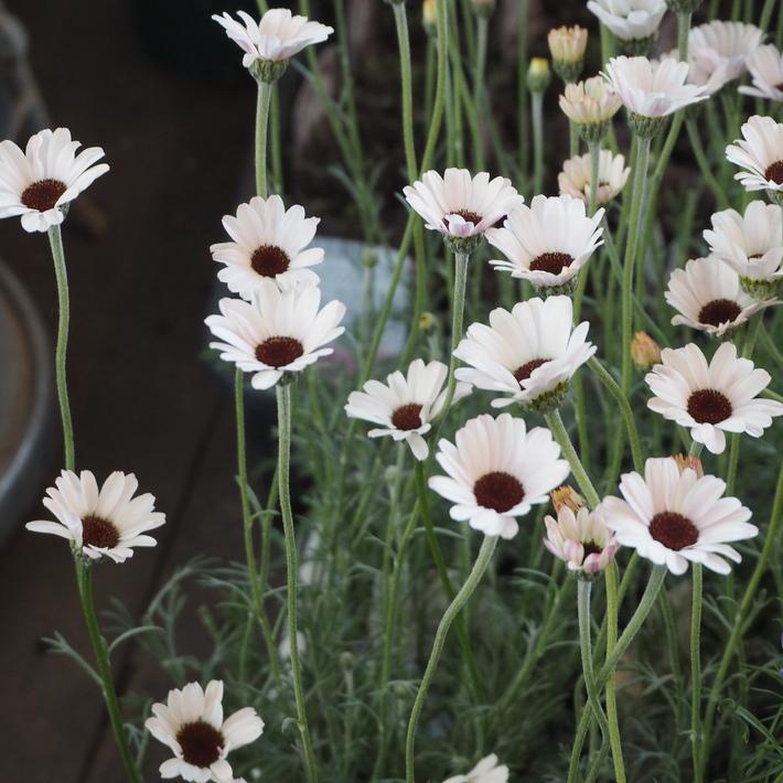 ナチュラル系の花材が入荷_a0292194_21173930.jpg