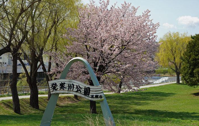 桜・山サクラ_d0162994_08335176.jpg
