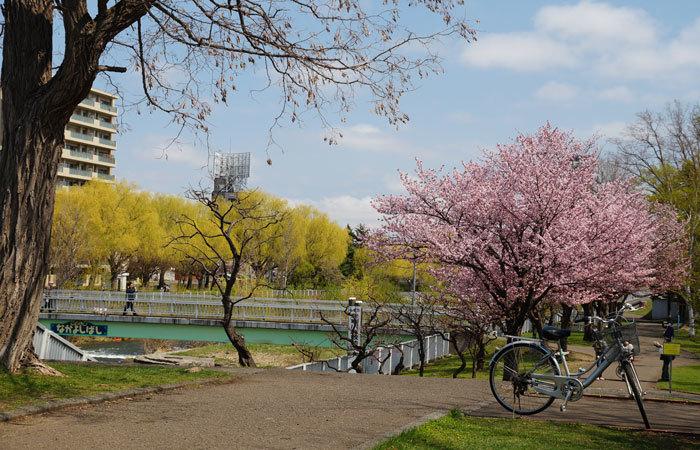 桜・山サクラ_d0162994_08345352.jpg