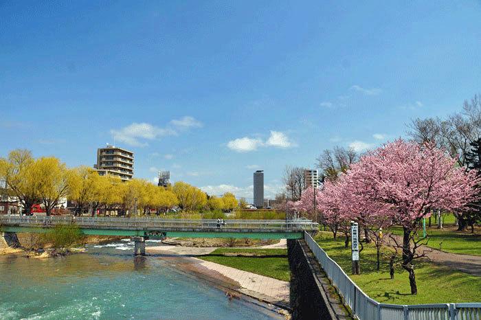 桜・山サクラ_d0162994_12301262.jpg
