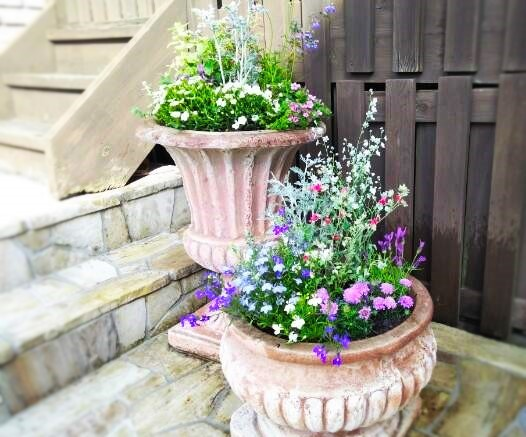 春夏用花の入れ替え ハーブも少し(^^♪_f0116297_16382407.jpg
