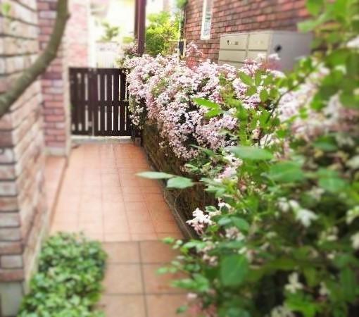 春夏用花の入れ替え ハーブも少し(^^♪_f0116297_16531479.jpg