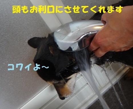f0121712_00552260.jpg