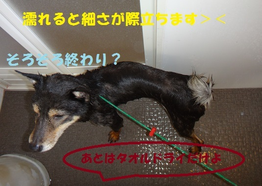 f0121712_01073166.jpg