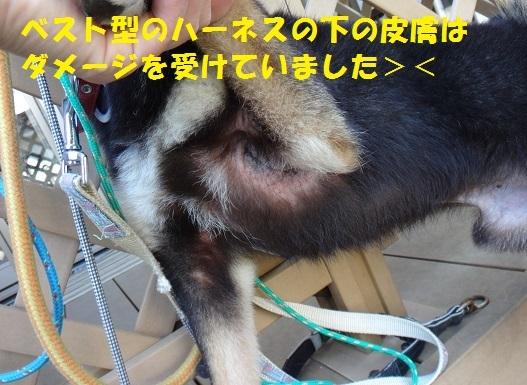 f0121712_01124192.jpg